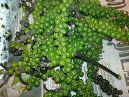 Перец зелёный горошек - фото 1