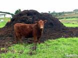 Чернозем. Перегной коровий, конский - фото 2