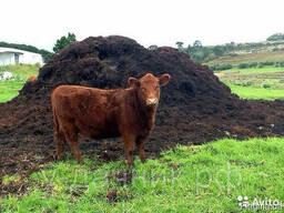 Продам перегной коровий 3 года