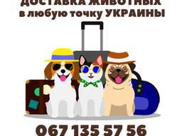 Перевозка домашних животных по Украине