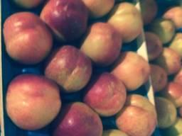 Персик и нектарин сербскии
