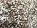 Вирощуйте топінамбур – отримайте власну сировину для пелет! - фото 5