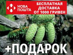 Пихта великая семена (50 шт) (Abies grandis) для. ..