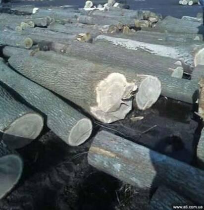 Пиловочник, тех-сырьё, балансы дуб