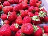 Пинетки для ягод - фото 3