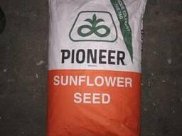 Pioneer p63le113 (П63ЛЕ113) - насіння соняшнику.