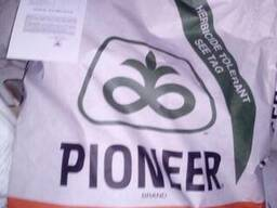 Піонер P64LE99 (П64ЛЕ99) - Насіння соняшника