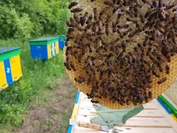 Пчелопакеты на весну 2020 года с Доставкой !