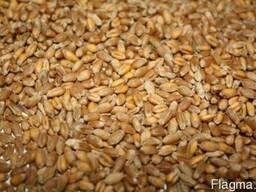 Побочный продукт пшеницы