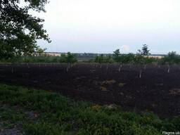 Ореховый сад 56 гектар село Синюхин Брод, г. Николаев