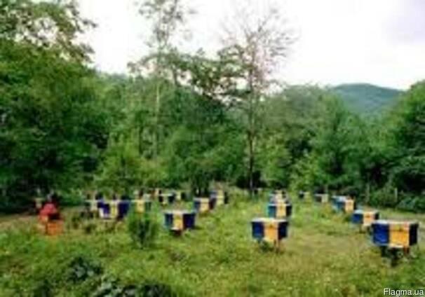 Подкормка для пчёл,54% белка, от 5кг. На мешок-скидка!