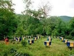 Подкормка для пчёл, 54% белка, от 5кг. На мешок-скидка!