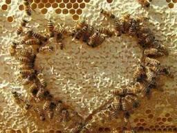 Подкормка пчел соевой мукой и белково -витаминной добавкой.