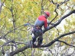 Подрезка и кронирование деревьев
