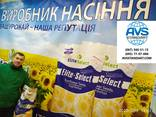 Подсолнечник ЕС САКСОН под Гранстар. Жаростойкий гибрид ЕС САКСОН высокоурожайный 50,2ц/га - фото 2