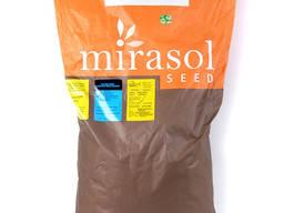 Подсолнечник Кастело (Castelo), Mirasol Seed (Испания)