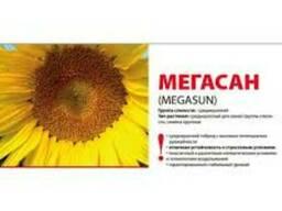 Подсолнечник Лимагрейн Мегасан посевной материал