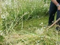 Покос травы, расчистка участка, уборка травы, камыша, камней