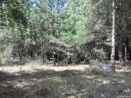 Покос травы, уборка участка от деревьев