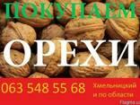 Чищеный грецкий орех(кругляк, бабочки, половинки) - фото 1