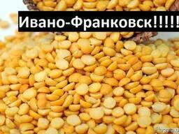 Куплю Горох Ивано-Франковск Украина