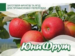 Покупаем яблоки для промышленной переработки большими объёма