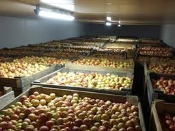 Покупаем яблоки - крупный опт, Днепропетровская обл.