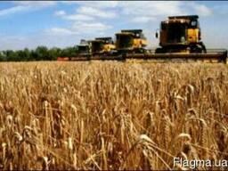 Полные БД. . Производители сельхозпродукции Украины 2020 г.