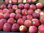 Польское яблоко от производителя La-Sad - фото 6