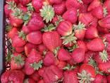 Саджанці полуниці - фото 3