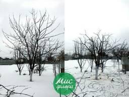 Понижение деревьев, обрезка, формирование кроны