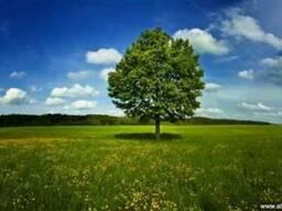 Посадка газонов Одесса озеленение участка