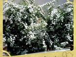 Посадка растений в Севастополе - фото 2