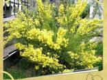 Посадка растений в Севастополе - фото 3