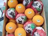 Предлагаем апельсины. Происхождение: Египет. - фото 2