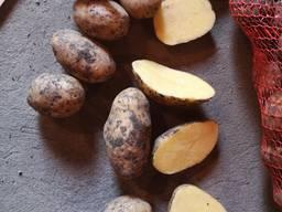 Предлагаем Картофель от 20 тонн