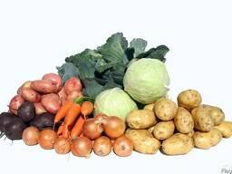 Предлагаем Овощи