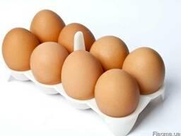 Предлагаем яйца куриные и перепелиные по Украине
