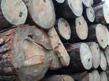 Предприятие закупает лес круглый (сосна, свежепил, С) - фото 1