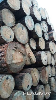 Предприятие закупает лес круглый (сосна, свежепил, С)