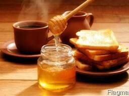 Предприятие закупает мед на постійній основі