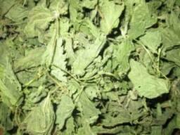 Предприятие закупит оптом листья крапивы сушенные