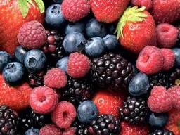 Предприятие закупит оптом замороженные ягоды
