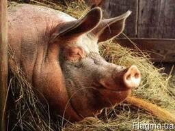Премикс для свиней Откорм Универсальный 3-2,5% от 40-120кг