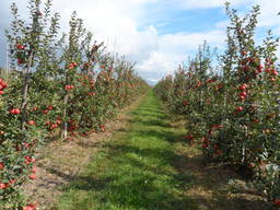 Прибыльное садоводческое хозяйство в Беларуси