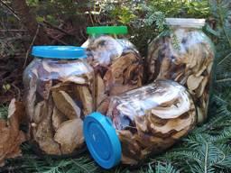Продам білі карпатські гриби