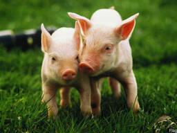 Пробиотическая кормовая добавка Байкал-Эм1 продаем