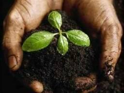 Продадим низинный чистый сельхоз. Торф в г. Мукачево