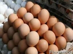 Продаем инкубацыонные яйца Мастер-Грей.Испанка....