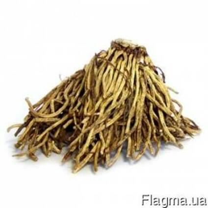 Продаем корень чемерицы
